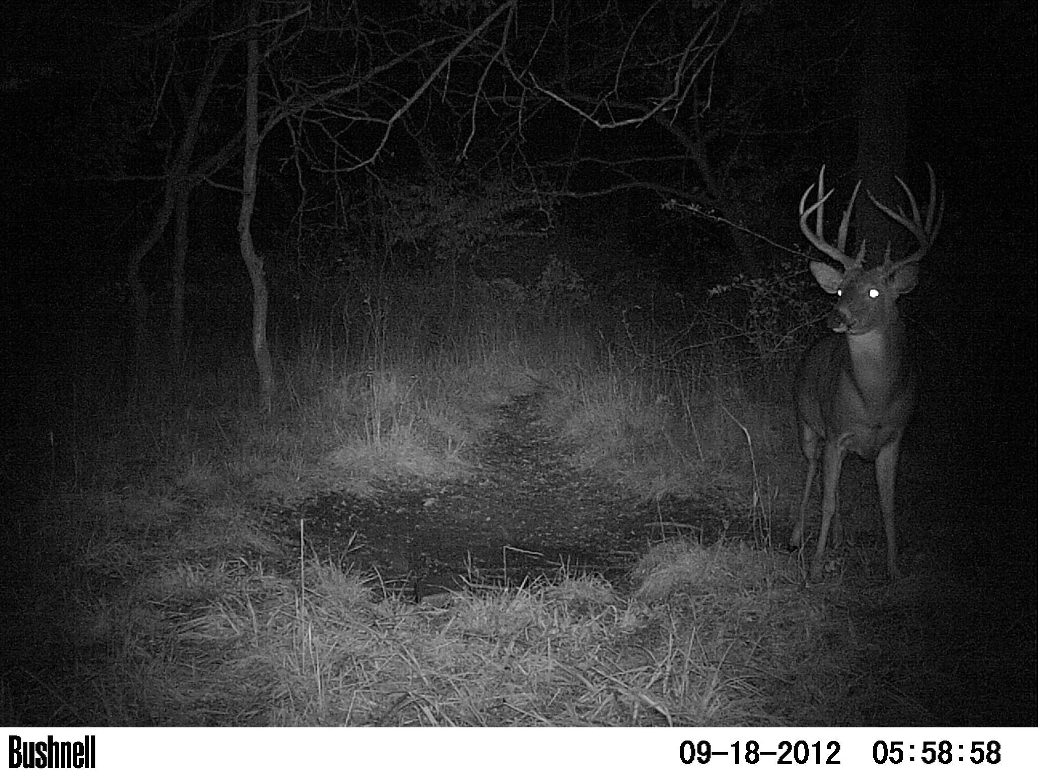 trail camera picture of big buck on Marion county 107 acre pacel