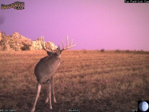 wide buck iowa looking into sunset