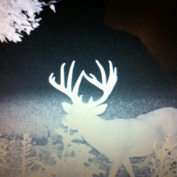 Trail camera photo of big buck Scott county 115 acre farm