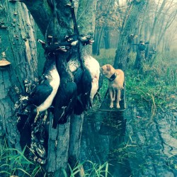 Wood duck hunt; Scott county Iowa 115 acre farm