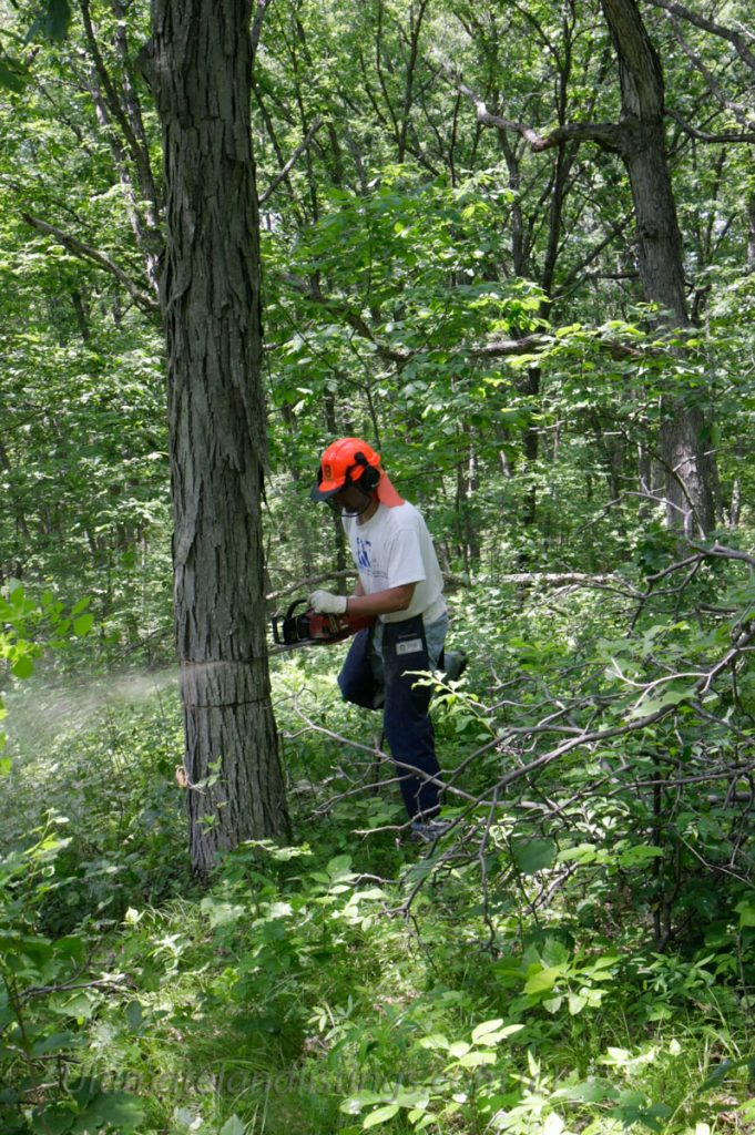 Man cutting tree with chainsaw in Iowa.