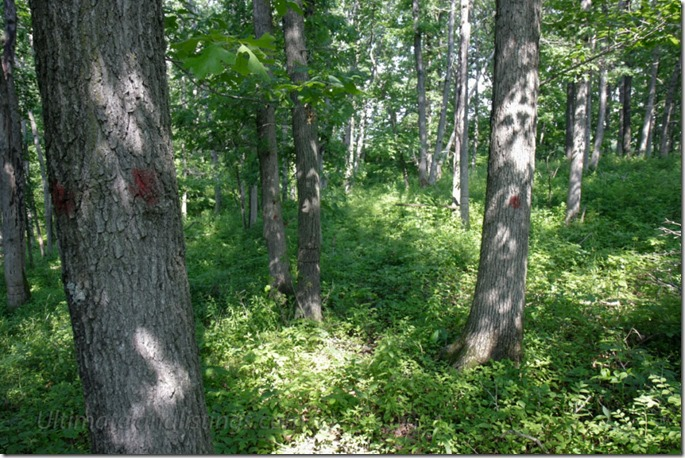 Picture of Iowa timber.